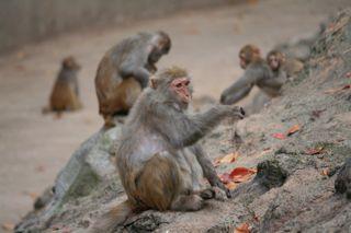 猿の手招き