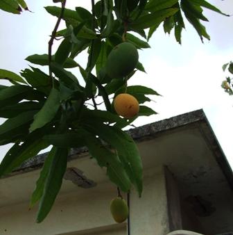 20080716-mangoDSCF0145.jpg