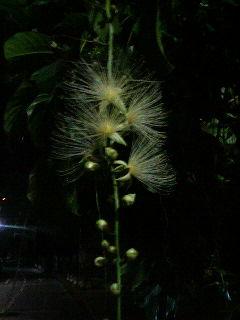 じんがきの花