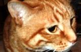 今日の猫(モルツ)