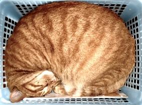 眠る猫(モルツ)