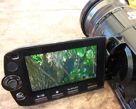 ビデオカメラに写ったノグチゲラ