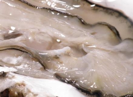 生牡蠣のアップ