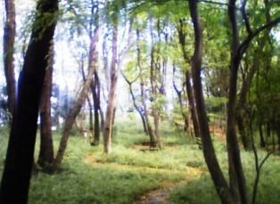 小沢城址の林