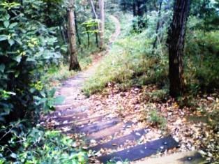 小沢城址の階段