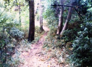 小沢城址の道