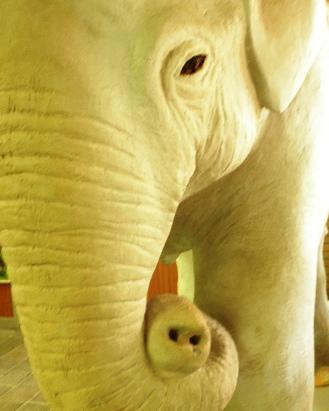 白い象のオブジェ